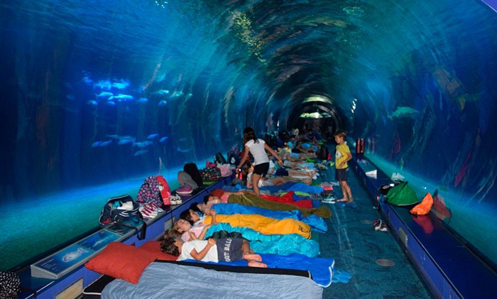 Dormire con gli squali - credit: manchainformation