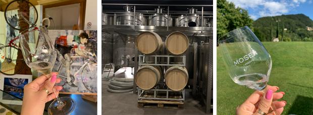 Cantine vinicole del Trentino: La cantina Moser Trento